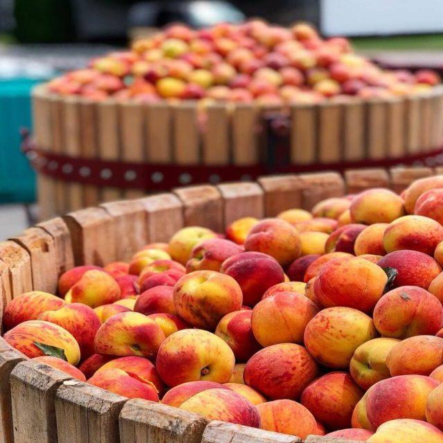 Fruits of Niagara